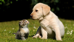 Cat Playing With Dog Superb Pic