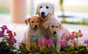 Cute Dog Puppy Image