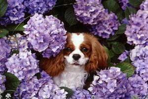 Cute Doggy with Flower