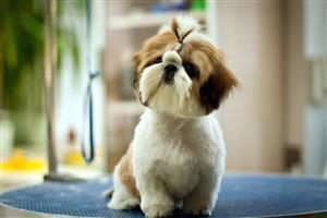 Cute Pet Dog Wallpaper