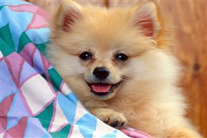 Cute Puppy Free Wallpapers Download