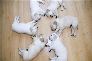 Cute Six Puppies Sleep in Round Image