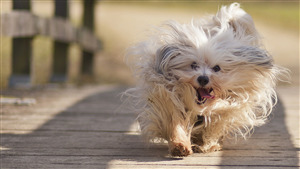 Dog Puppy Running Pic Download