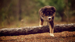 Dog Puppy in Forest