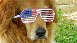 Dog Wear Sunglass Funny Photo