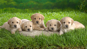 Group of Dog Baby Sitting on Green Grass