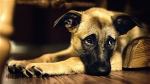 Sad Photo of Animal Dog