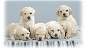 White Cutest Dog Puppies