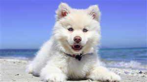 White Dog Puppy Sitting Beach