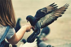 A Cute Dove Sitting on Child Hand