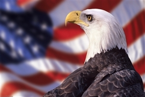 Bird Eagle HD Wallpaper