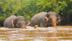 5K Wallpaper of Elephant in River