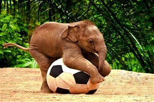 Cute Elephant Baby Kid Play with Football Wallpapers