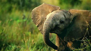 Cutest Elephant HD Photo