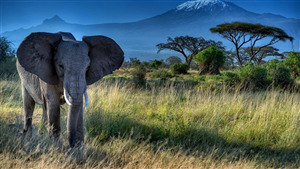 Elephant Desktop Background Pic Download