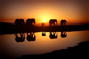 Elephant Family During Sunset