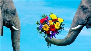 Elephant Propose With Flowers Pot Wonderful Wallpaper