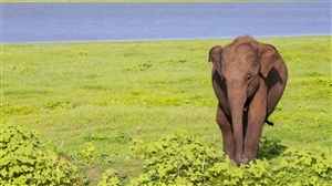 Elephant in Periyar National Park
