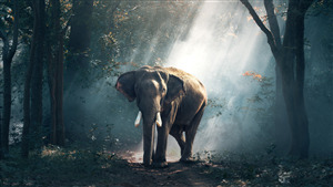 Free Download Wallpaper of Elephant