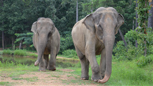 Photo of 2 Wildlife Elephant