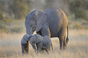 Two Elephant Baby Playing Wallpaper