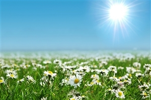 Beautiful Daisies Flowers Farm Wallpapers