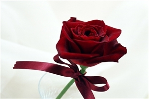 Beautiful Red Rose with Rebin HD Laptop Background Wallpaper