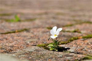 Beautiful Small Flower HD Wallpaper