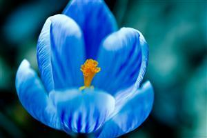 Blue Flowers Wallpaper Download 1