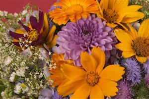 Colourful Flowers Images