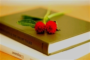Flower on Book HD Wallpaper