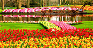Keukenhof Flower Garden in Lisse City Netherland Wallpaper