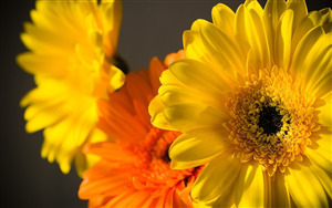 Yellow and Orange Flower HD Photo