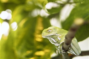 Cute Green Frog Seating on Branch Animal Wallpaper