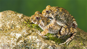 Download Photo of 2 Frog