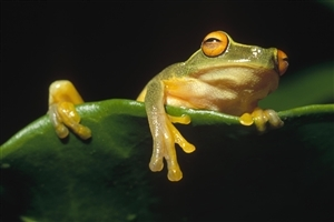 Frog on Leaf Image Gallery