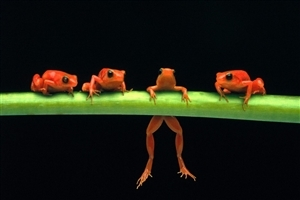 Funny Frog Photo