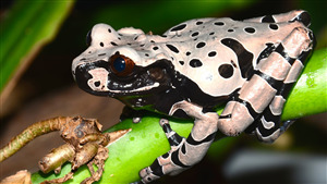 Photo of Silver Frog Sitting on Branch