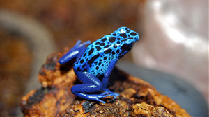 Superb Photo of Blue Frog