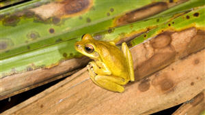 Yellow Frog 4K Photo