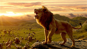 Lion Hd Wallpapers Images Pictures Photos Download