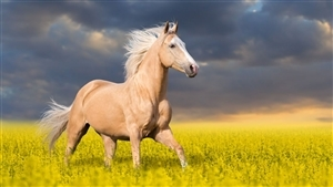 Animal Horse Wallpaper