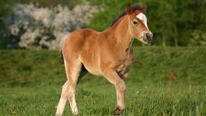 Beautiful Horse Baby
