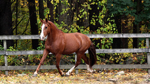 Brown Horse Running Pic Download