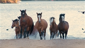 Group of Horse Near Beach