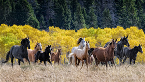 Group of Horses 4K Image