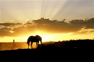 Horse During Sunset HD Photo