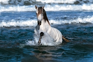 Horse in Water Pics