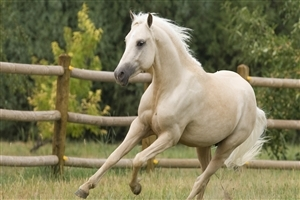 Lovely White Horse Running in Ground HD Animal Pics