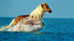 Photo of Horse in Sea